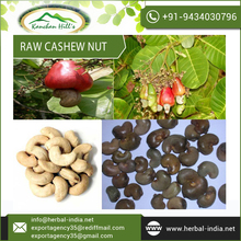 Outstanding Supplier of Raw Cashew Nut Supplying at Culminating Rate