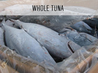 Sea Frozen Albacore Tuna Fish (IQF)