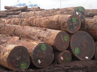 Teak Type and Round Shape TALI WOOD LOGS FOR SALE