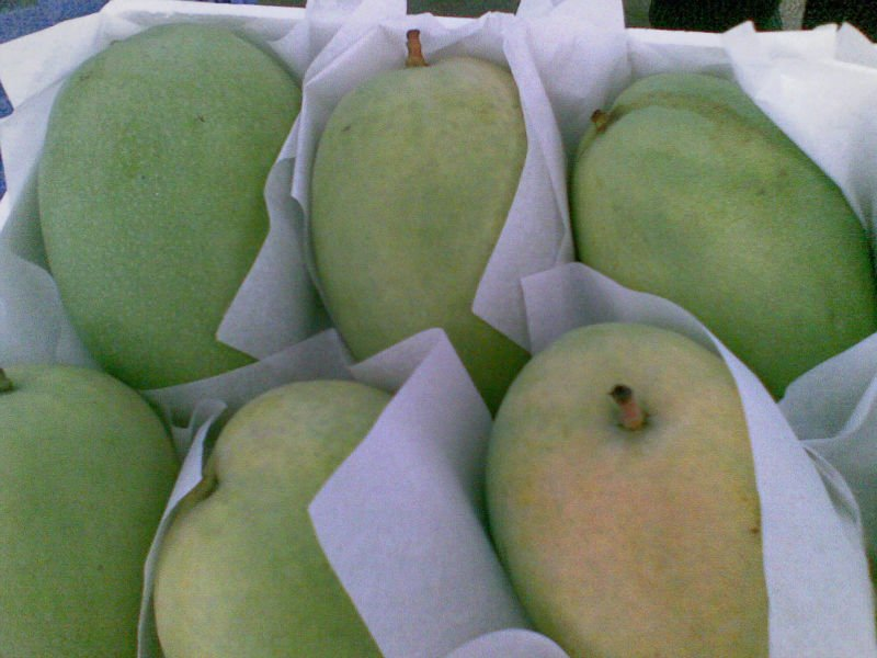 Incredible price for premium mango with excellent flavor, hot sell 2017