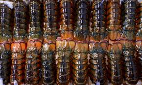 Whole Frozen Lobster and Tails / Live Lobsters For sale Fresh and frozen Lobsters FOR sale