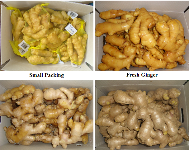 GINGER 2016 chinese crop 150g up in mesh bag/carton/pvc box