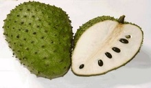 FRESH SOURSOP FRUIT/FRESH GRAVIOLA FRUIT/SOURSOP LEAVES