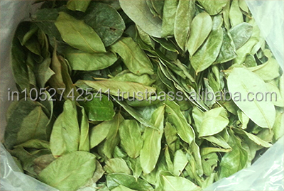 Pure Quality Dry Graviola Soursop Leaves For Sales