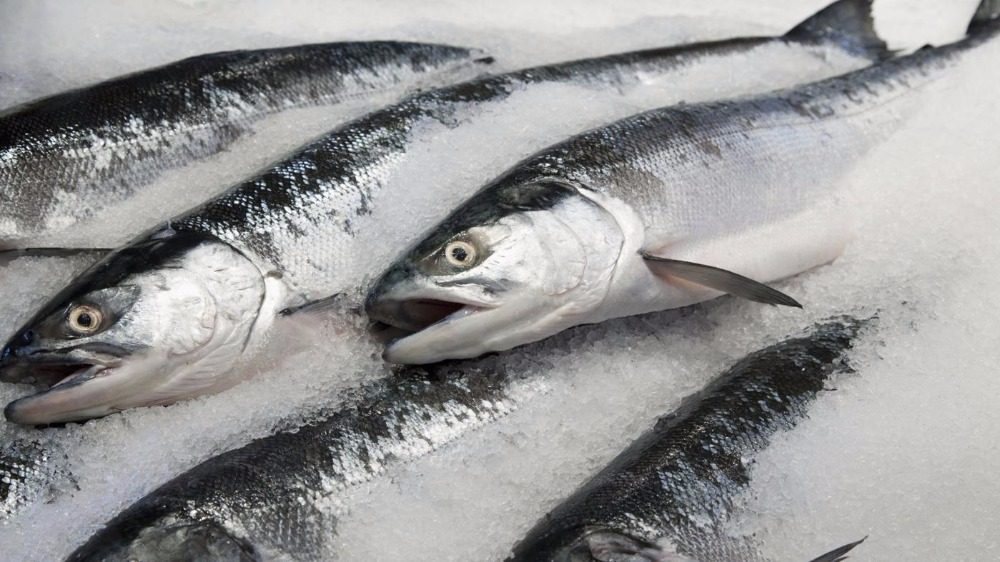 Wholesale Atlantic Frozen Salmon/Fresh Norwegian Salmon/ Frozen Wild Salmon