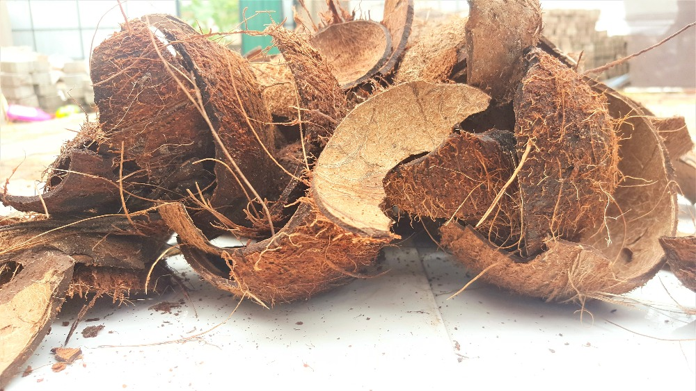Sri Lankan Top Grade Coconut shell halves and Chips