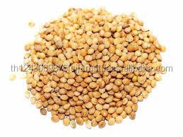 Yellow White Millet / Green millets / Yellow Broom Corn Millet