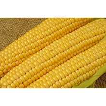 Non GMO Yellow maize/corn / Dry White Maize For Bulk Export!