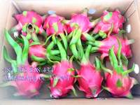 VIET NAM FRESH RED DRAGON FRUIT/ +84963818434 whatsapp