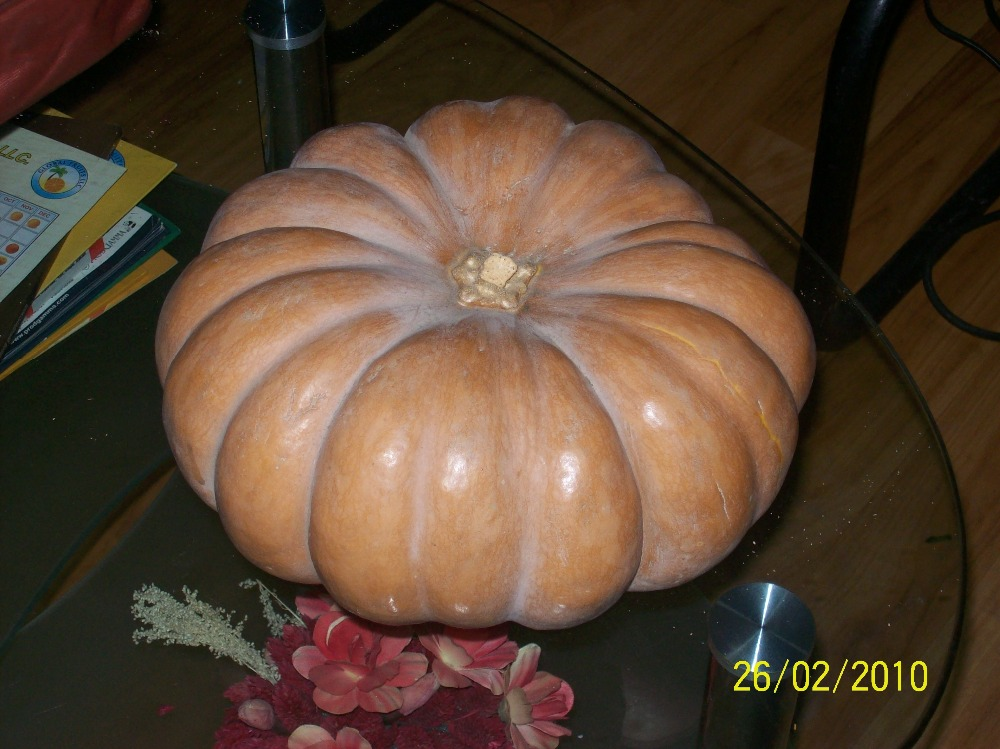 fresh pumpkin for sale