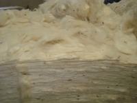 India raw cotton Bengal Deshi