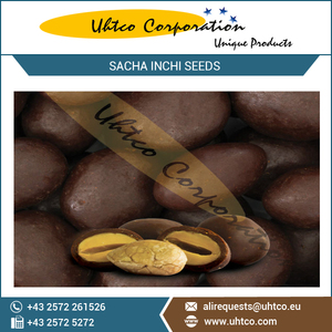 Sacha Inchi Seeds Covered in Chocolate with Yacon Syrup