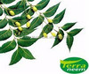 FERTILIZER NEEM OIL
