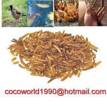 bulk dried mealworm with 25% Crude Fat for chicken manufacturer