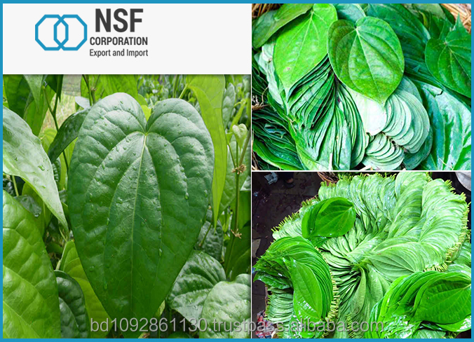 Fresh Green Betel lieve Export Quality