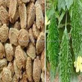 Bitter Gourd Seed Oil ( OEM / ODM ) 30 ml / 50 ml / 100 ml / 200 ml from Borg Export