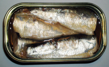Best Canned Sardine 125G in oil