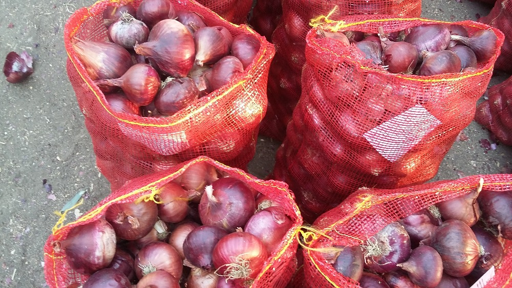 egyptian fresh Red onion