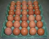 Chicken Fresh Table Eggs