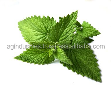 SPEARMINT OIL CERTIFICATE OF ANALYSIS
