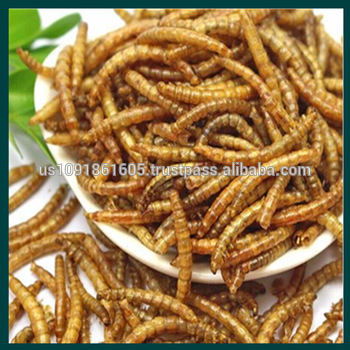 Dried mealworms manufacturer for chicken feed wholesale bird feed chicken reptile food