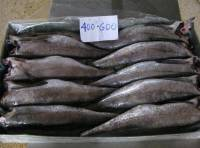 Fresh Frozen Hake Whole Fish,Frozen Fish Fillet