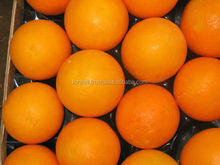 FUND NEW CROP Fresh CITRUS Orange from egypt competitive price