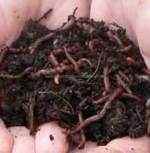 best vermicompost on sale !!!
