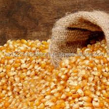 Non GMO Yellow maize/corn / Dry Yellow Maize