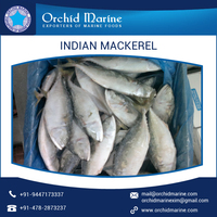 Most Demanded Indian Mackerel at Cheap Price
