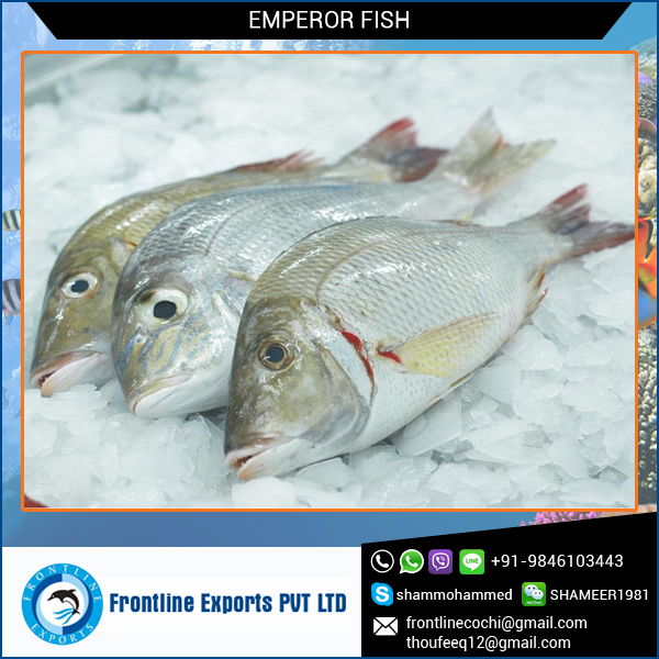 High Quality Frozen Emperor Fish Best Price