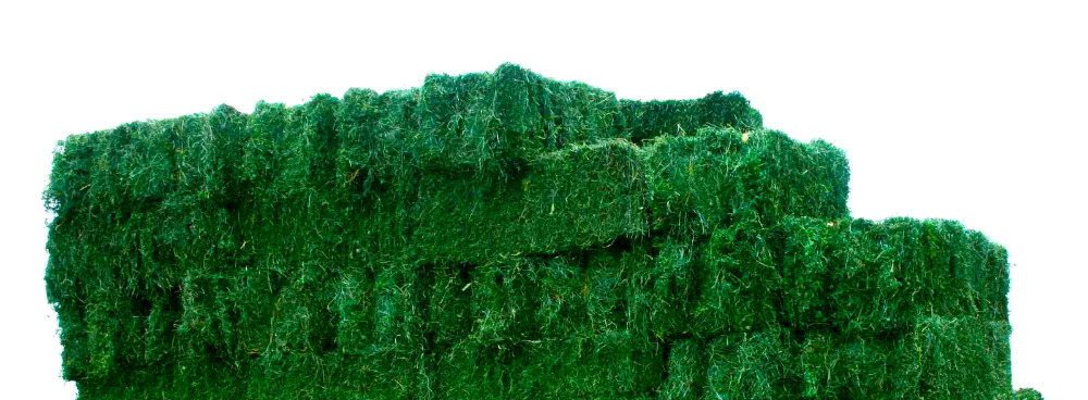 Top Quality Alfafa Hay for Animal Feeding Stuff Alfalfa / Alfalfa Hay