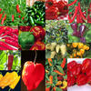 /product-detail/hot-scotch-bonnet-hot-pepper-50030048796.html