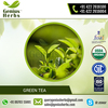 Green Tea of Optimum Range Available from Bulk Supplier at Low Cost