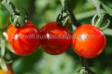 Produce Fresh Tomato From Egypt