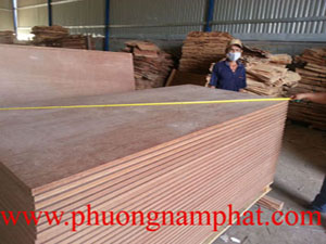 cheap container flooring plywood in Vietnam