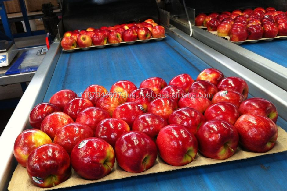 Fresh Apple Fruits for Sale