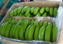 High Quality Fresh Green Cavendish Banana Cheap Price
