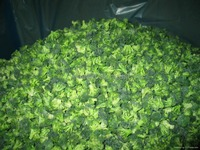 IQF Frozen broccoli for sale