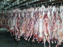 Halal Whole Lamb Meat Frzozen/Fresh