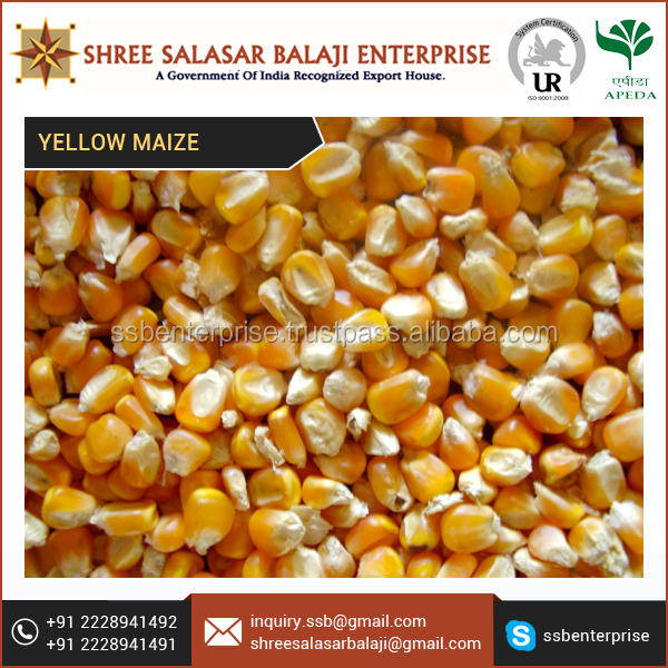 Low Priced Premium Quality made Yellow Maize for Non-Food Products