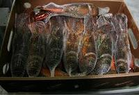 Frozen Sea Food Surimi Lobsters,Green Lobsters,Lobsters Tail and Slipper Lobsters