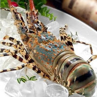 H_Live crayfish spiny lobster whole round good quality from Vietnam