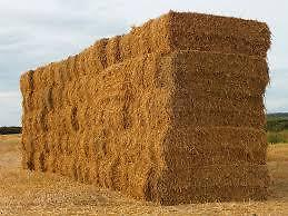 BARLEY/WHEAT STRAW FOR SALE IN LARGE BALES IN COALDALE Watch|Share |Print|Report Ad