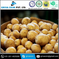 Hot Sale Fresh Organic Russet Potato in Mesh Bag
