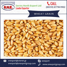 Latest Technology Processed Milling Wheat at Bulk Price