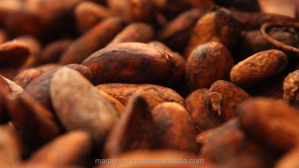 organic certified fine cacao / cocoa beans