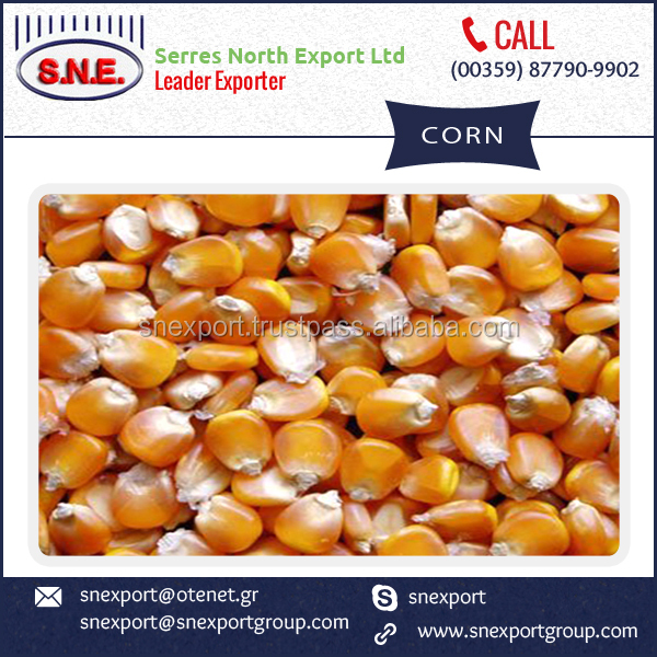 Natural Yellow Corn for Factory Use Available at Market Rate