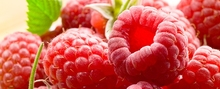 2016 new crop iqf frozen bulk raspberry
