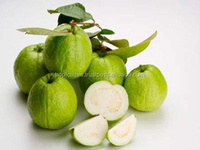 Fresh Guava for exporting Best quality in Vietnam